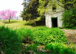 cropped-springhouse_01.jpg